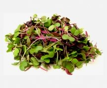 Living Spicy Microgreens