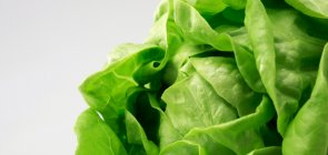How to care for your living lettuce