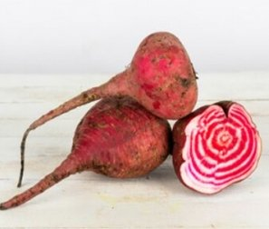 Organically Grown Beets, Bunched Chioggia