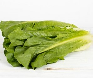 Lettuce, Romaine (small)