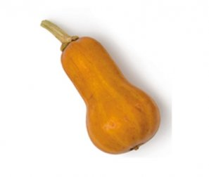Squash, Mini Honeynut