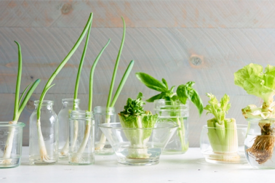 Grow Food from Scraps