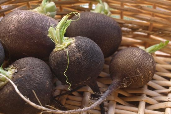 Vegitales: Black Radish