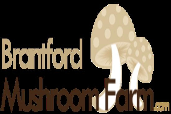 Meet Your Maker: Introducing the Brantford Mushroom Farm